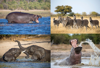 Edit_Botswana_Collage