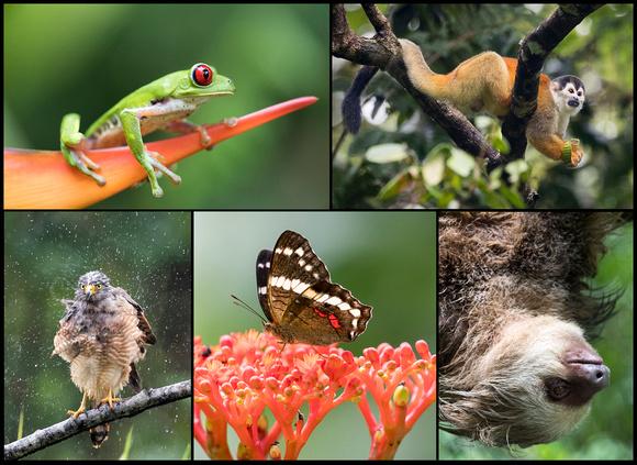 Edit_Costa_Rica_Collage_Border